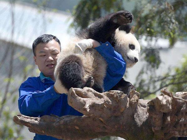 https://de.topchinatravel.com/pic/stadt/chengdu/attractions/Wolong-Giant-Panda-Nature-Reserve-5.jpg