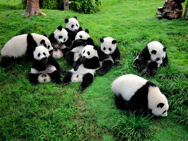 12 Tage China Panda Reise