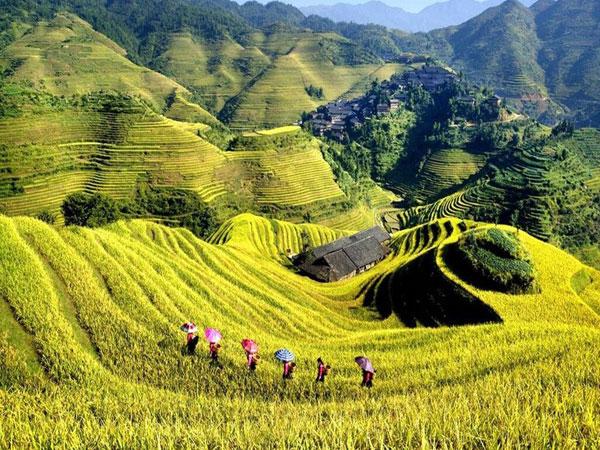 https://de.topchinatravel.com/pic/stadt/guilin/attractions/Longji-Rice-Terrace-20.jpg